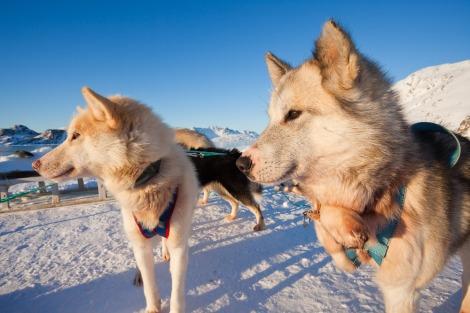 Winter scene near Kulusuk, Greenland